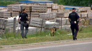 Police officers and canine members search an area near the border of Halton and Peel where three men were violently attacked by a group of suspects with baseball bats.