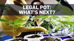 Legal pot