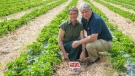 The owners of The Strawberry Ranch, near Saskatoon, recently announced the ranch would no longer be growing strawberries. (Facebook)