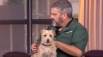 Dr. Adrian Walton on summertime pet safety