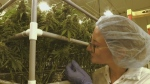 Pot legislation has businesses seeing green
