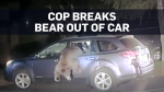 Caught on cam: Cop rescues wild bear then runs