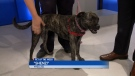 Pet of the week: Shenzi
