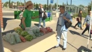 The pop-up farmers market at Calgary's Somerset-Bridlewood Station is part of a city pilot project to promote locally grown produce.