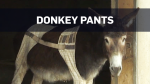 Donkey gets new set of pants at animal sanctuary