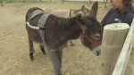 Donkey turns heads with trend-setting wardrobe