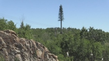 Communication tower or tree?