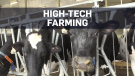 Happier and healthier: Milking cows with robotics