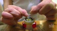 Pot timeline worries Saskatoon police