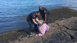 Oak Bay police officers rescued a newborn seal pup in the waters of McNeil Bay Thursday night. June 22, 2018. (Facebook)