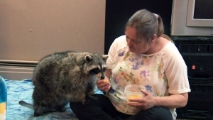 Couple with pet raccoon begins search for new home