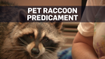 Ron and Wendy Hook have had their pet raccoon Dennis for five years, but now they're facing a dilemma.