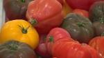 CTV Montreal: Big changes for NDG Food Depot