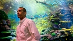Jon Dohlin, director of the New York Aquarium, listens during an interview inside an underwater tunnel that features a coral reef ecosystem with sharks at the New York Aquarium, Wednesday June 20, 2018, in New York. (AP Photo/Bebeto Matthews)