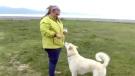 Husky hero helps hiker stranded in Alaska