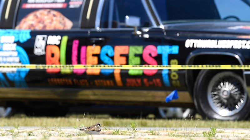 Eggs are seen below a nesting killdeer bird on a cobblestone path on the site of the Ottawa Bluesfest music festival, is seen in front of the festival's promotional limousine, in Ottawa on Monday, June 25, 2018. THE CANADIAN PRESS/Justin Tang