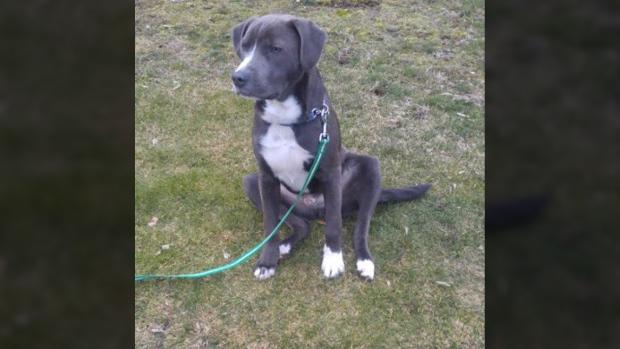 luke stolen dog