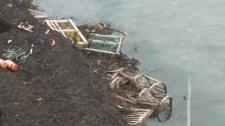 lobster straps damaged after storm