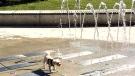 toronto summer, dog