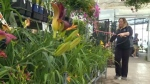 Garden centres want part of pot industry