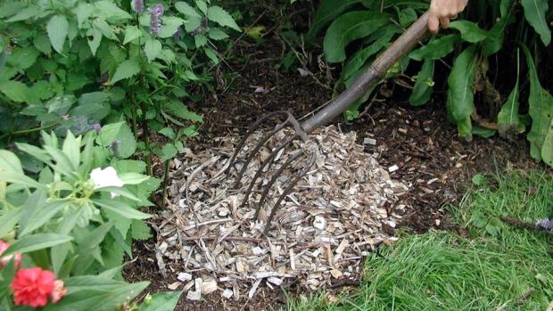 Mulch on a garden