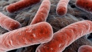 Health authorities in southern Alberta say a recently discovered case of tuberculosis poses no risk to the general public.