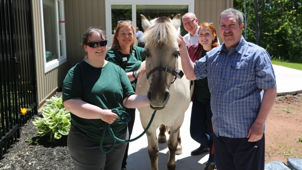 palliative care horse