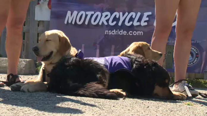 The National Service Dog Ride raises money for support dogs for veterans.