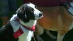 Dog owners gather for a good cause