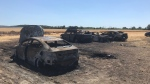 Burnt-out vehicles will be assessed after a grass fire damaged dozens in a field being used as a parking lot in Niagara-on-the-Lake. (Sean Leathong/CTV News Toronto)