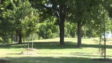 Guelph park greenery