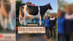 Bettina and Henk Schuurmans at a stop in Saskatchewan just days before the crash. (Courtesy: Twitter/@SaskMilk)