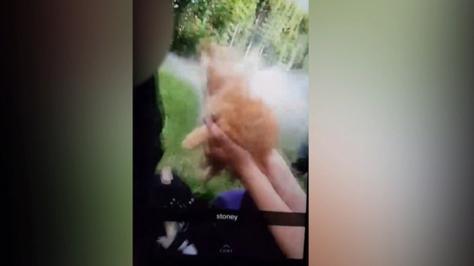 A still image from video posted to Snapchat shows a person blowing smoke from a bong into a kitten's face.