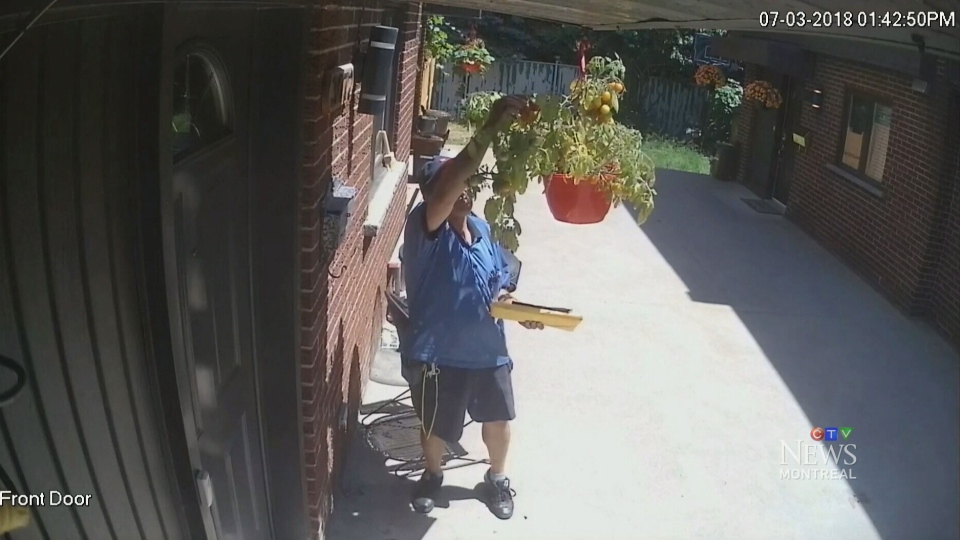 A Canada Post employee is captured by a security camera taking produce from a hanging plan in Montreal.