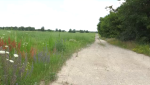 The potential site of a proposed glass factory in Guelph.