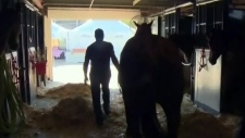 Outrider's horse put down at Stampede