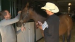 Mark Sutherland and Dr. Renauld Leguillette are working together on an ammonia test for Stampede horses.