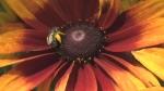 Helping  pollinators in your garden