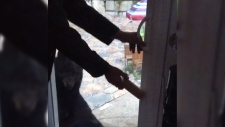north shore family feeding black bear video