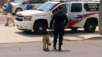 Police presence downtown toronto