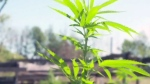 Sudbury landlord group has pot concerns