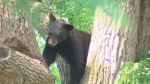 black bear port perry