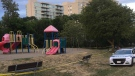 Police are seen at a park in Mississauga on July 13, 2018 after a boy was poked by a needle while playing in a sand pit. (PRP)
