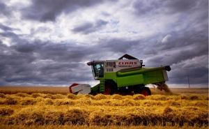 A farmer drives his harvester over a field near Frankfurt, Germany, Monday, July 9, 2018. Due to the long warm and dry weather period many farmers are expecting a bad harvest. (AP Photo/Michael Probst)