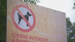 There are large signs at each of Sandy Beach's entrances, along with increased patrol. Since the dog ban came into effect, there's also noticeably fewer people walking the sandy stretch. (CTV Montreal)