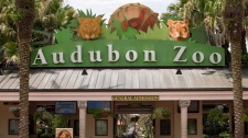 The Audubon Zoo closed after a jaguar escaped from its habitat and killed six animals, according to a release from zoo officials, Saturday, July 14, 2018 in New Orleans. (Brett Duke/ The Times-Picayune)