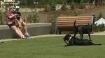 The University District says that 65 percent of the residents of the community will have dogs and that's why it built a dog park for them.