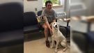 Morgan Thompson waits with her dog Saturn at a veterinary clinic in Saskatoon, after finding the missing Labrador. The one-year-old dog was missing for 10 days after she ran from a car following a crash. (Morgan Thompson)