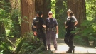 Elderly man assaulted in Burnaby park