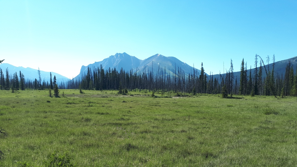 Here is a view of the remote valley meadow in the interior of Banff National Park, AB, where the three female bears were released on Tuesday, July 17, 2018. (Howard Smith/Aspen Wildlife Sanctuary)